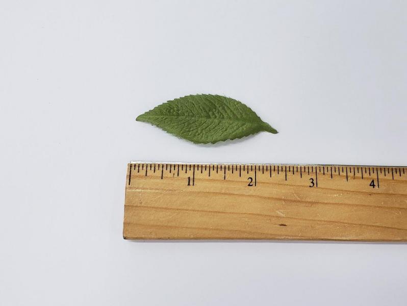 Leaf #4