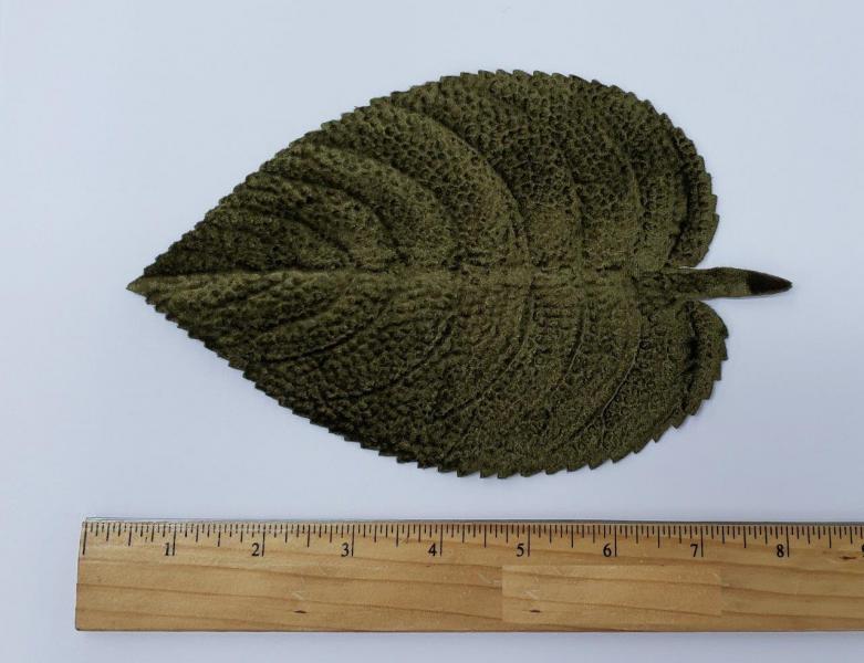 Leaf #50